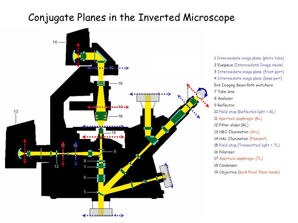 Conjugate Planes in the Inverted Microscope