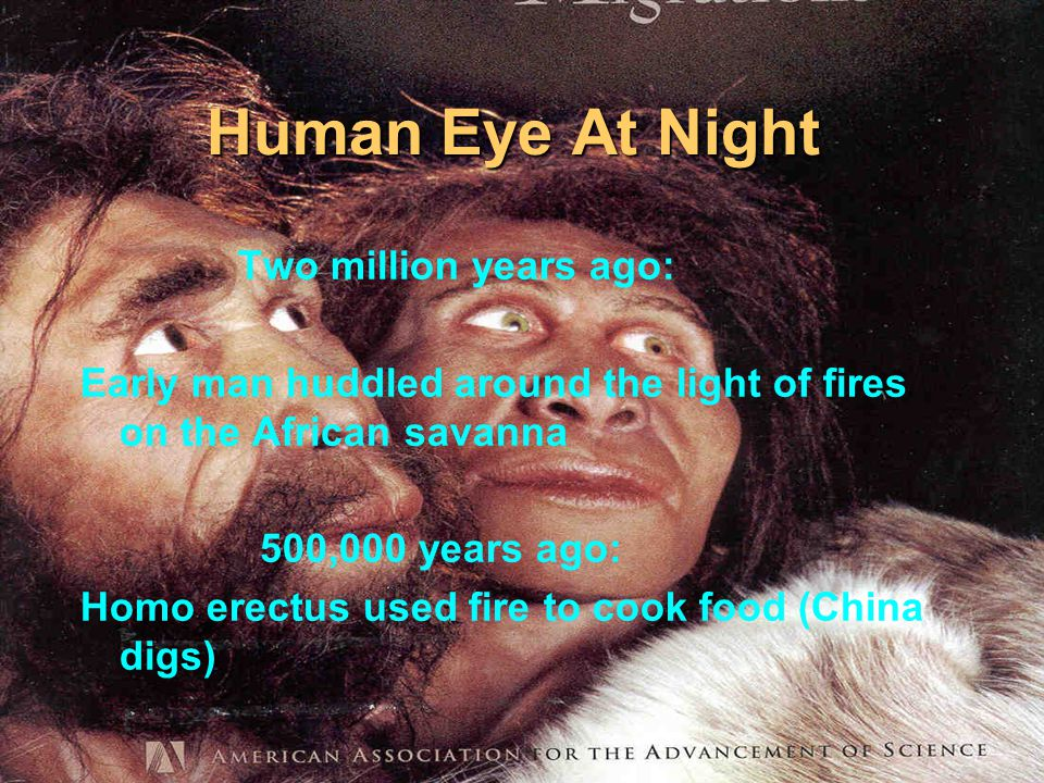 Human Eye At Night Two million years ago: