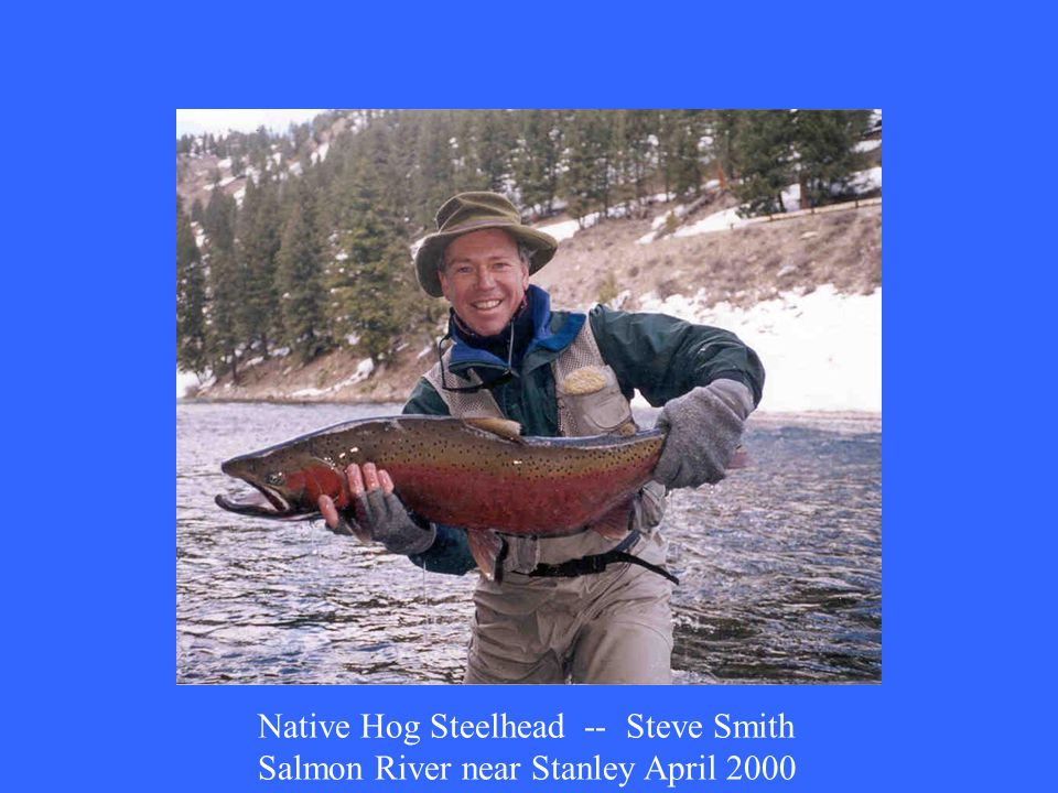Native Hog Steelhead -- Steve Smith