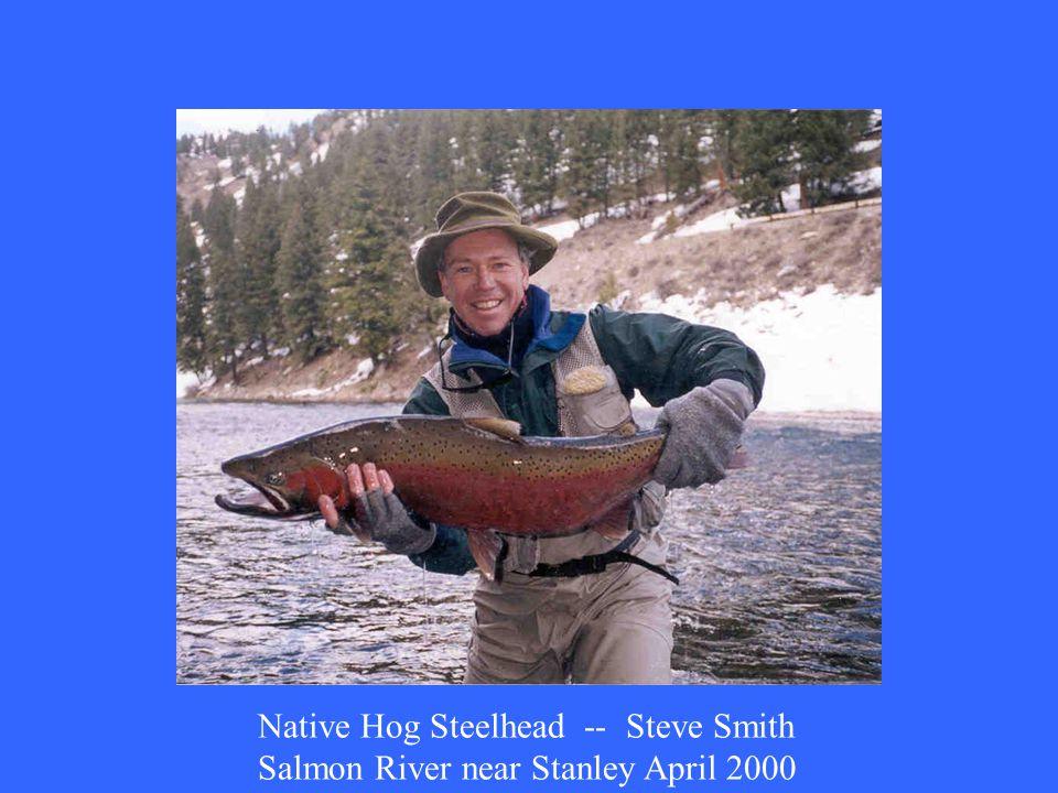 Native Hog Steelhead -- Steve Smith