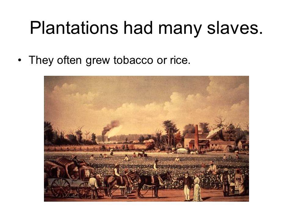 Plantations had many slaves.