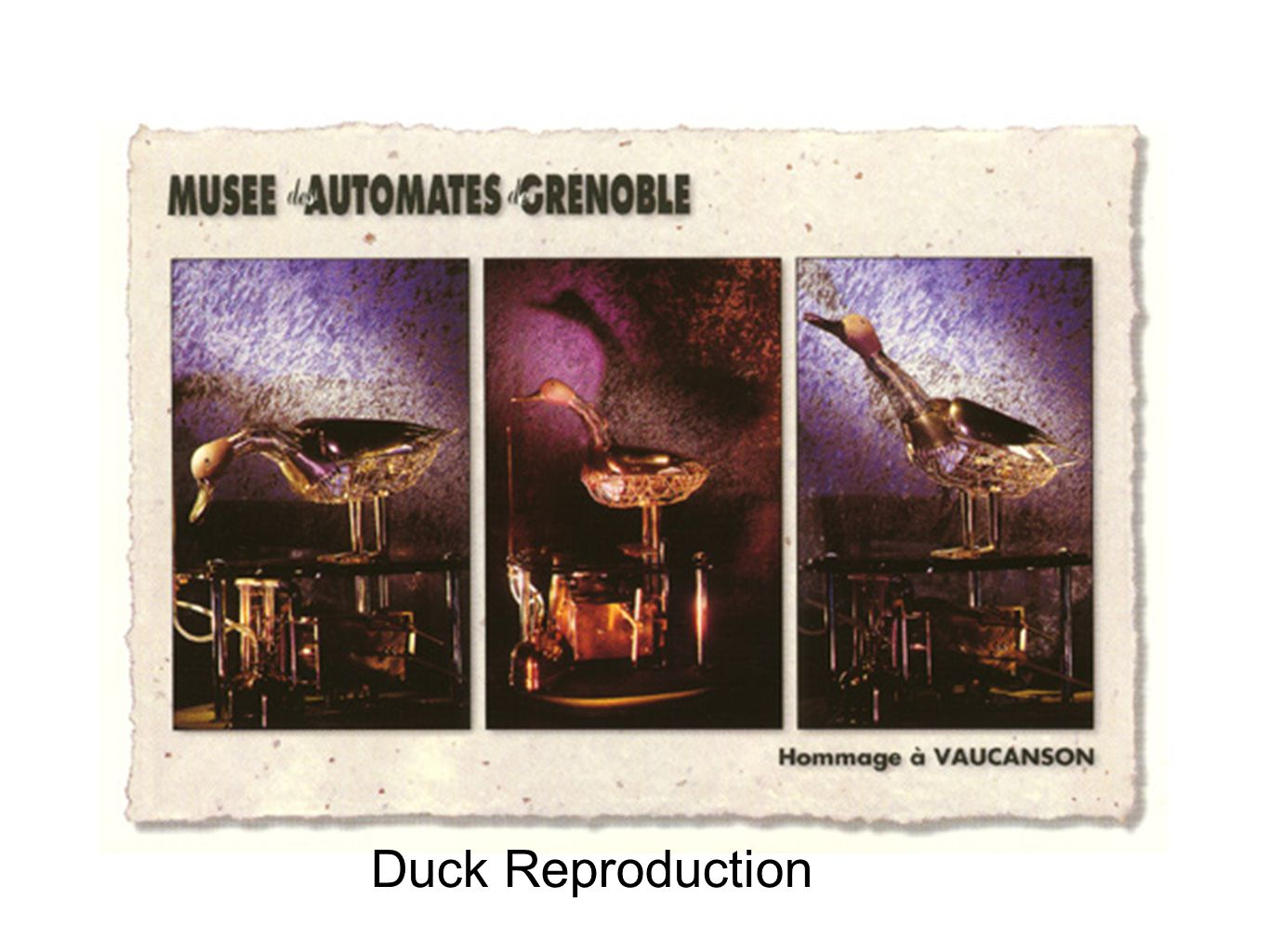 Duck Reproduction