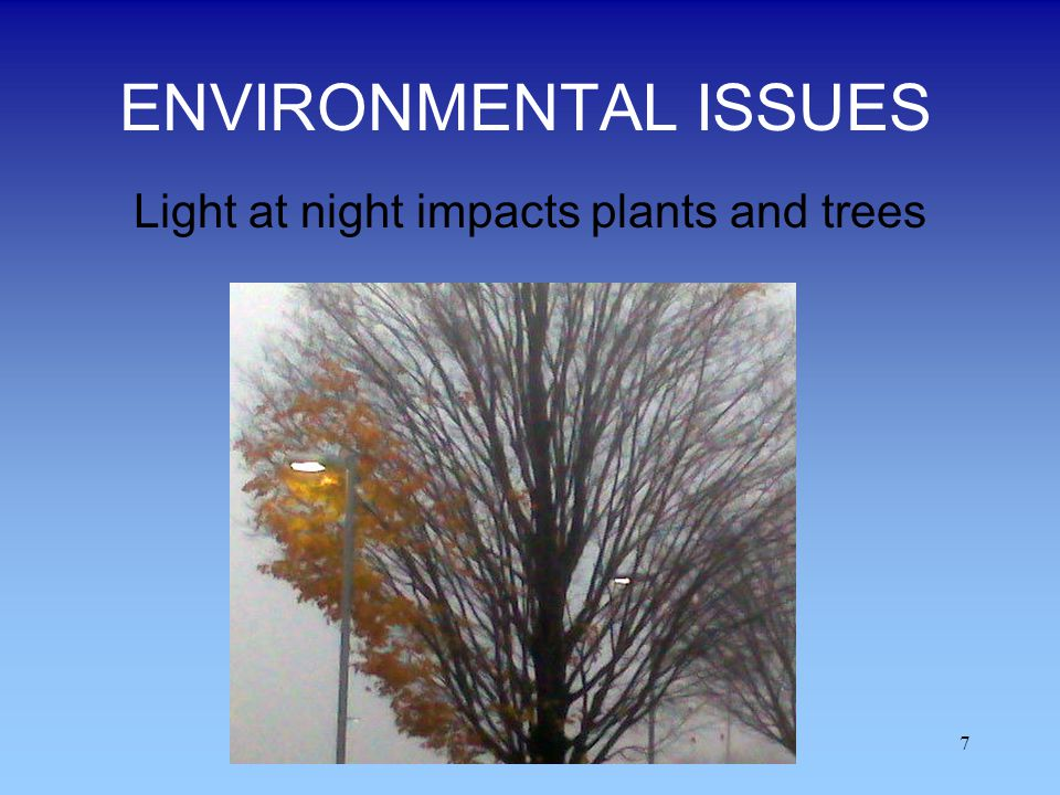 Light at night impacts plants and trees