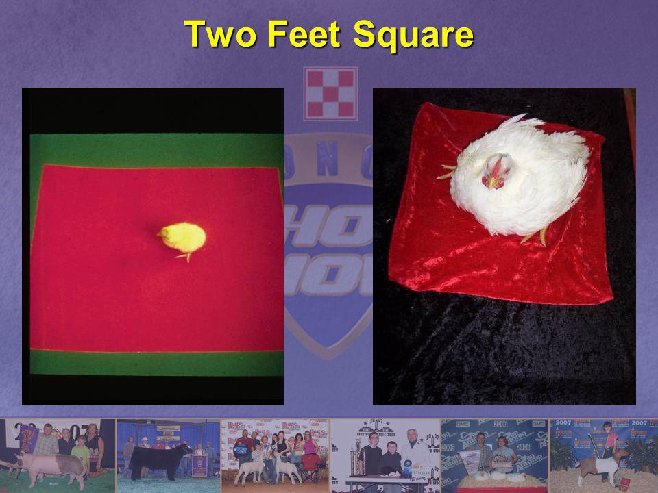Two Feet Square