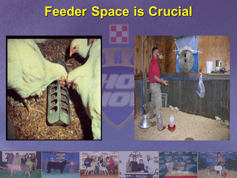 Feeder Space is Crucial