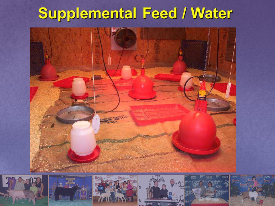 Supplemental Feed / Water