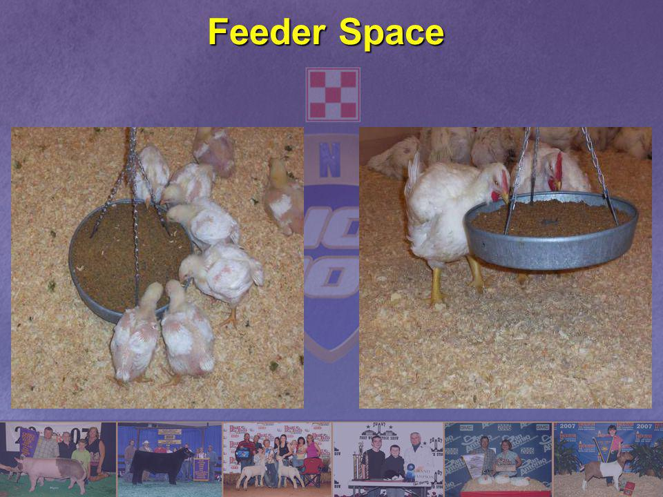 Feeder Space