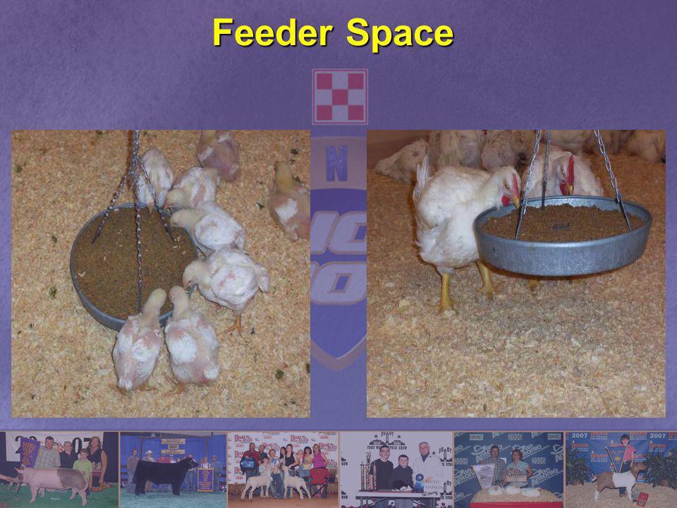 Feeder Space