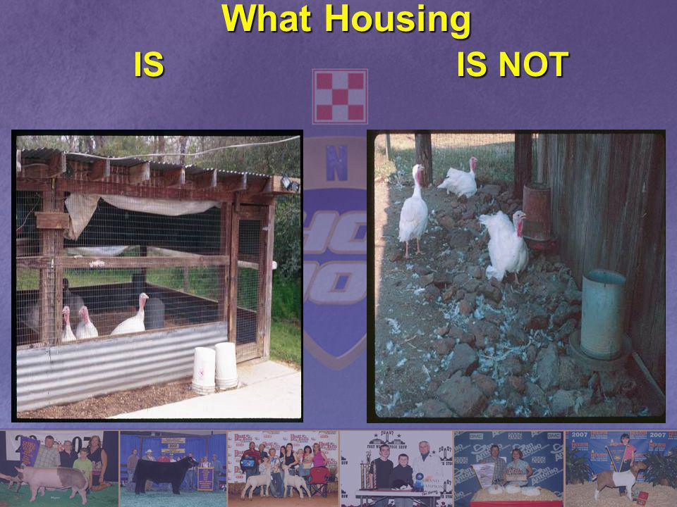 What Housing IS IS NOT