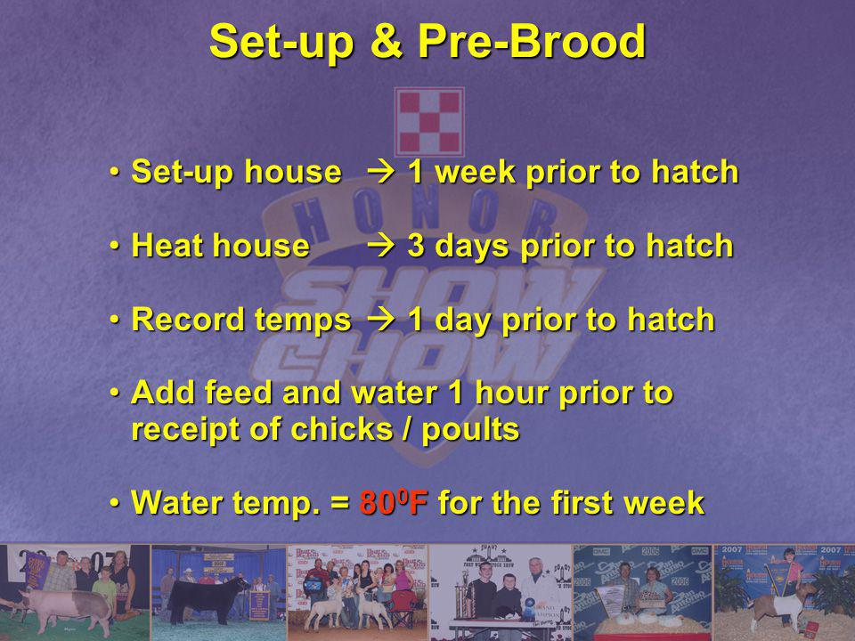 Set-up & Pre-Brood Set-up house  1 week prior to hatch