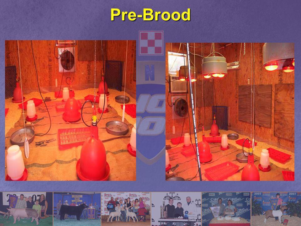 Pre-Brood