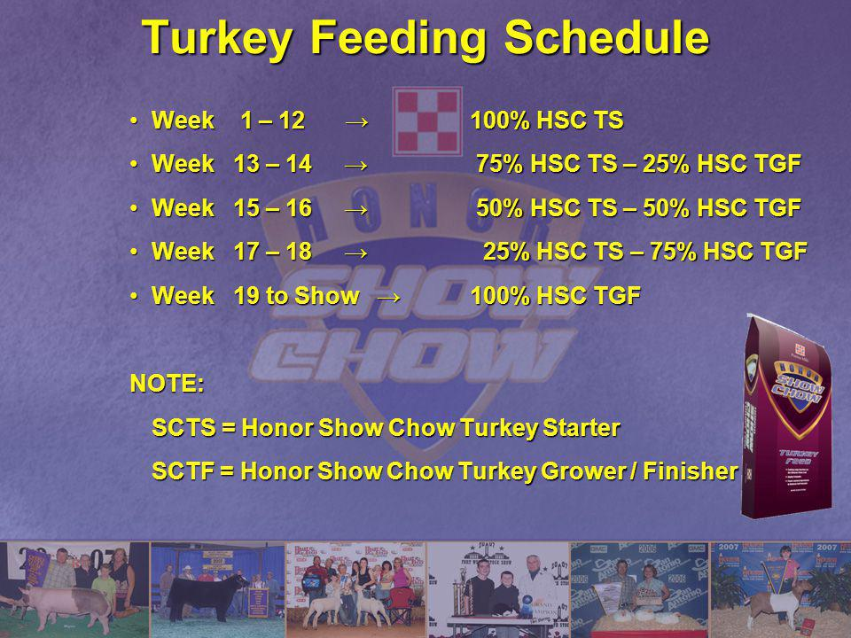 Turkey Feeding Schedule