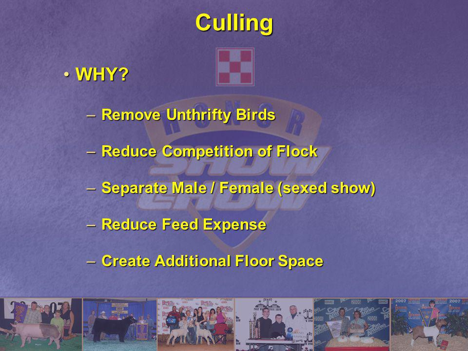 Culling WHY Remove Unthrifty Birds Reduce Competition of Flock
