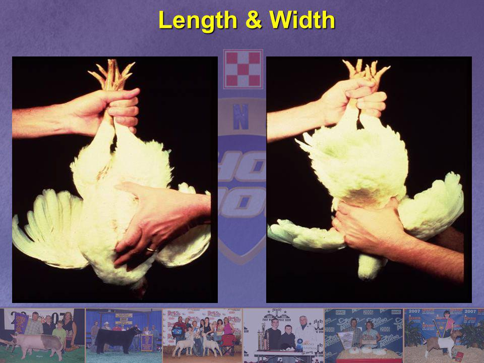 Length & Width
