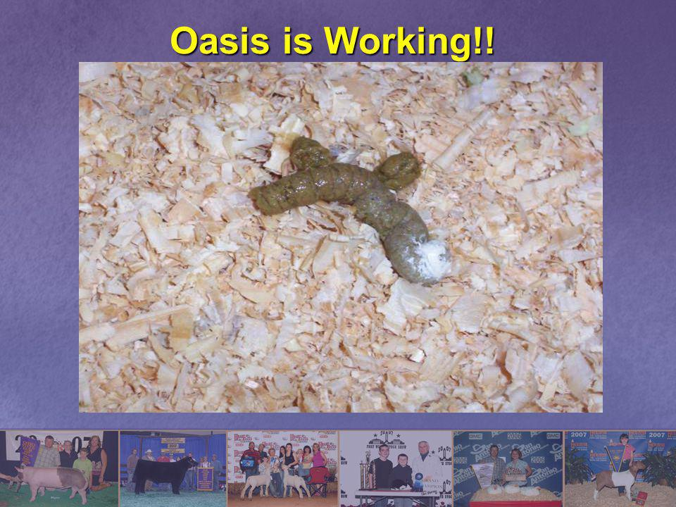 Oasis is Working!!