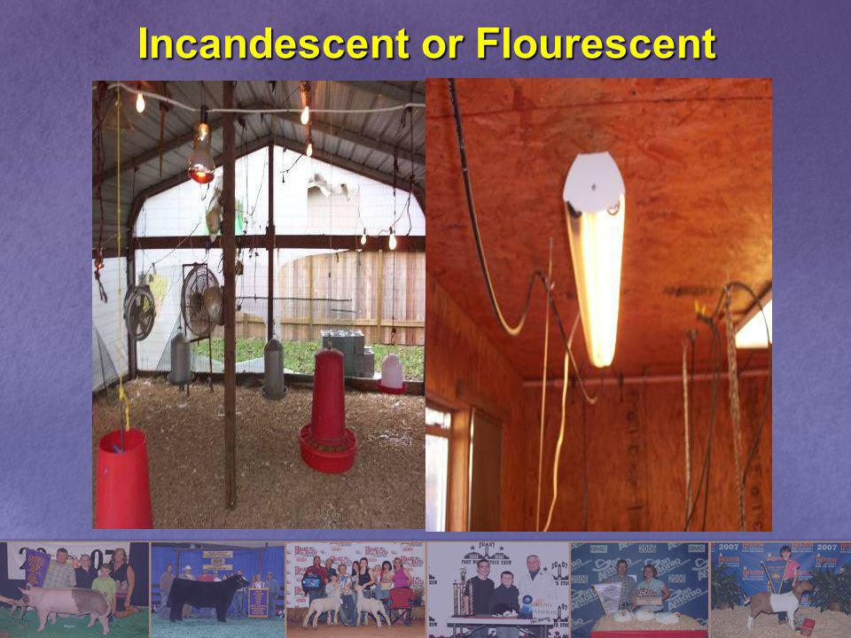 Incandescent or Flourescent