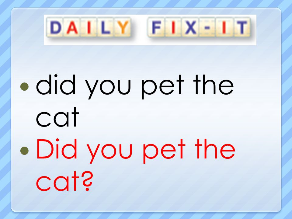 did you pet the cat Did you pet the cat
