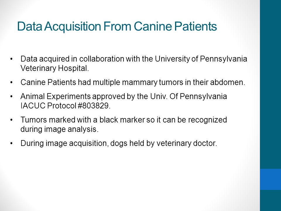 Data Acquisition From Canine Patients