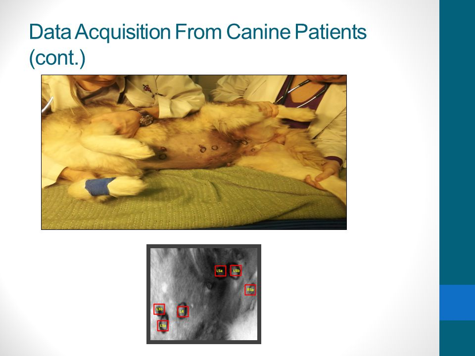 Data Acquisition From Canine Patients (cont.)