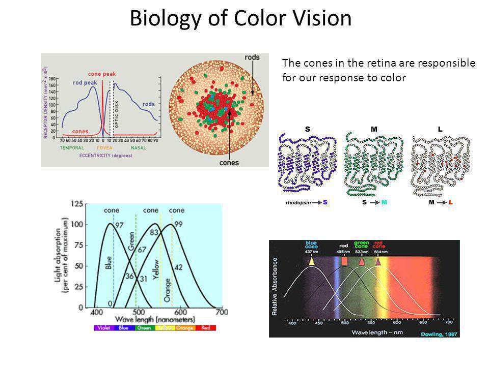 Biology of Color Vision