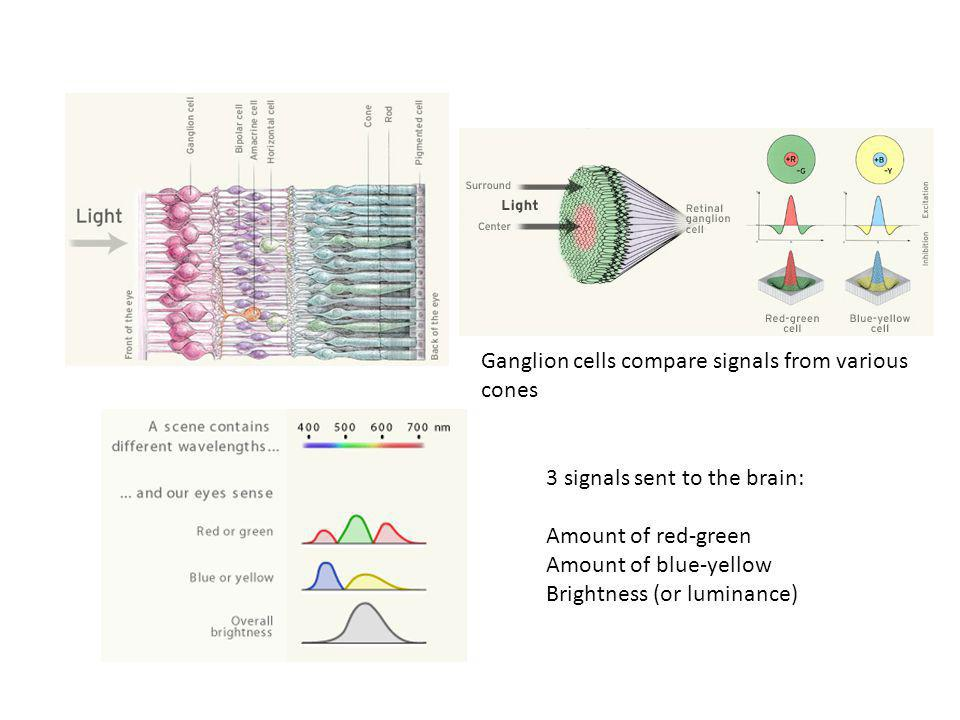 Ganglion cells compare signals from various cones