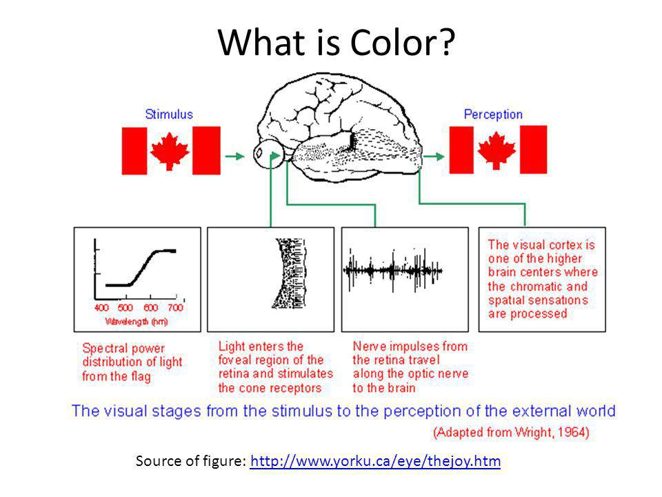 What is Color Source of figure: http://www.yorku.ca/eye/thejoy.htm