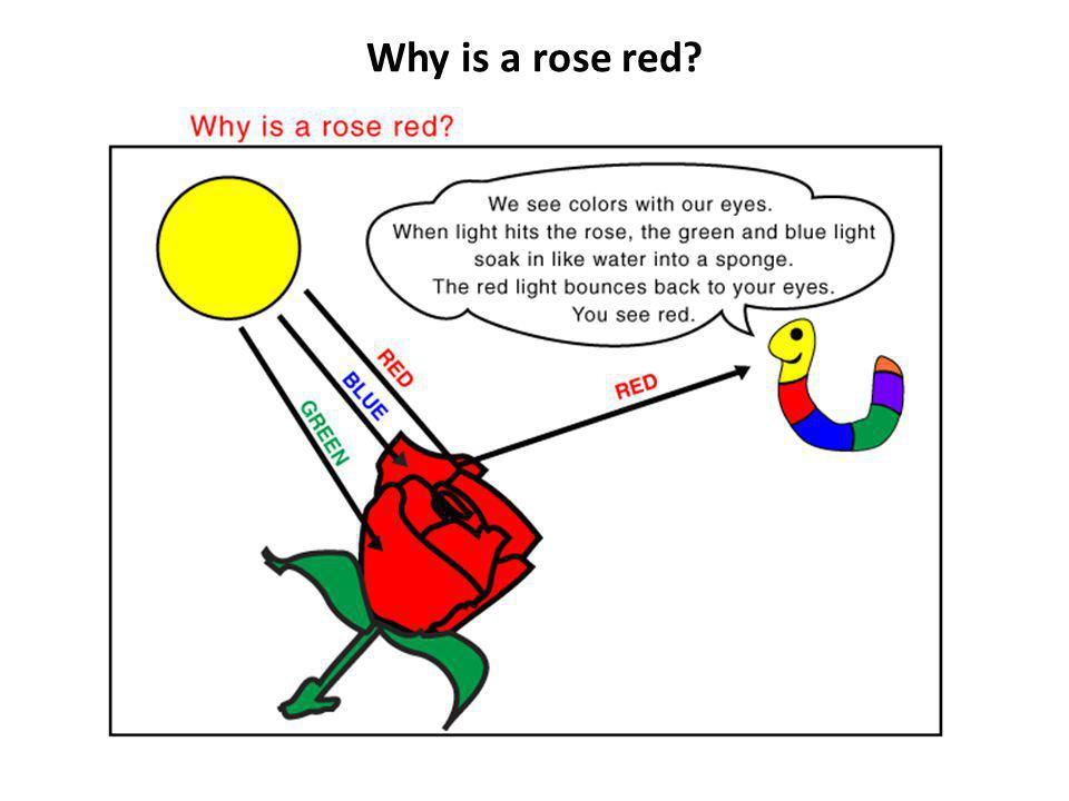 Why is a rose red.