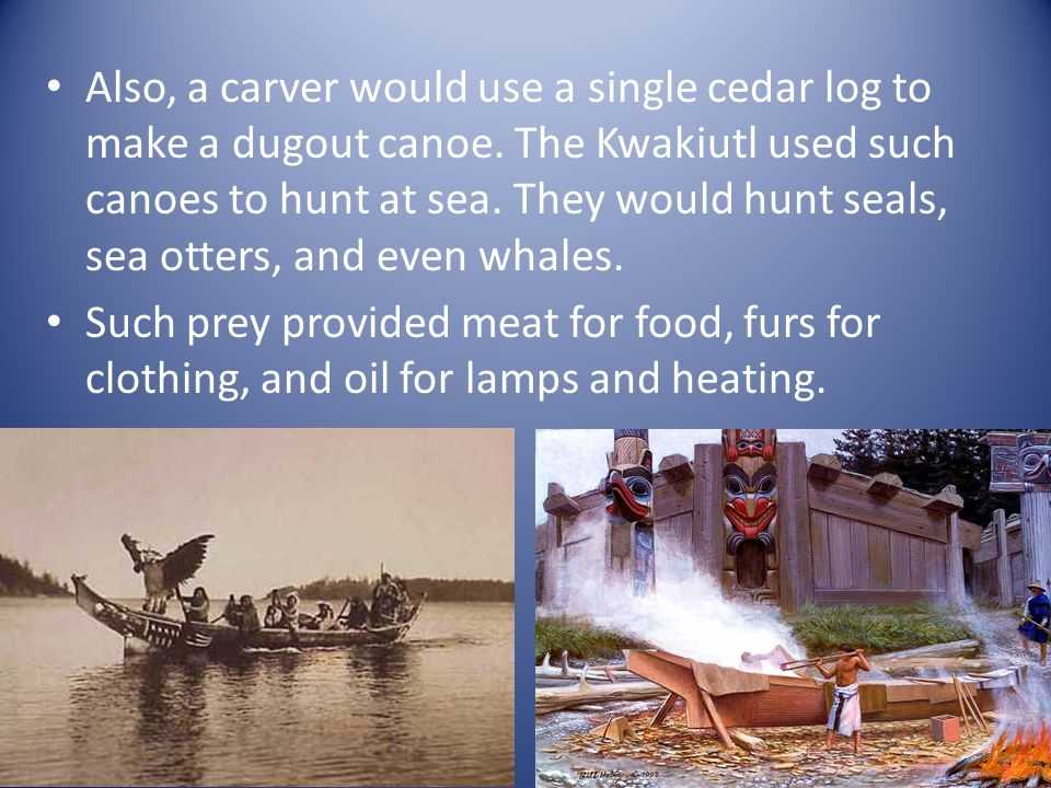 Also, a carver would use a single cedar log to make a dugout canoe
