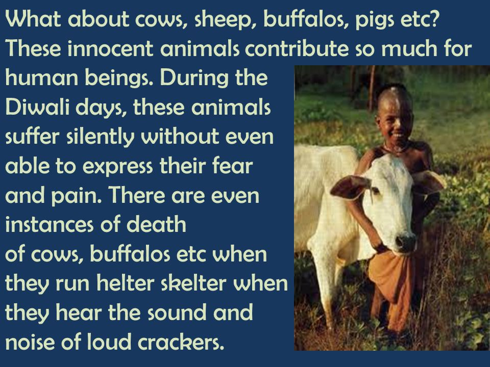 What about cows, sheep, buffalos, pigs etc