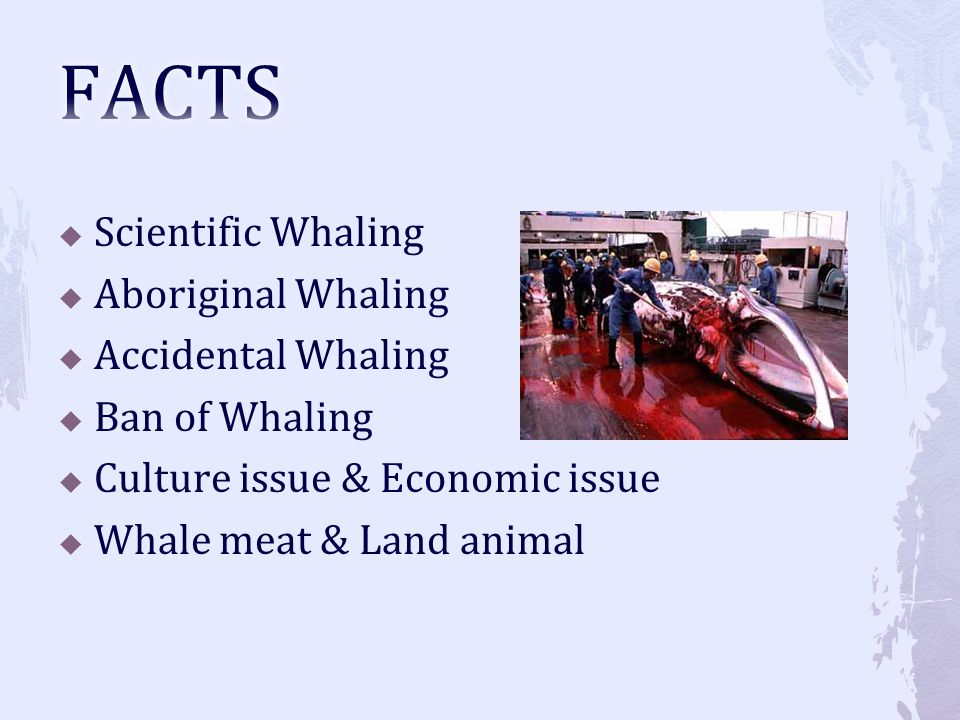FACTS Scientific Whaling Aboriginal Whaling Accidental Whaling