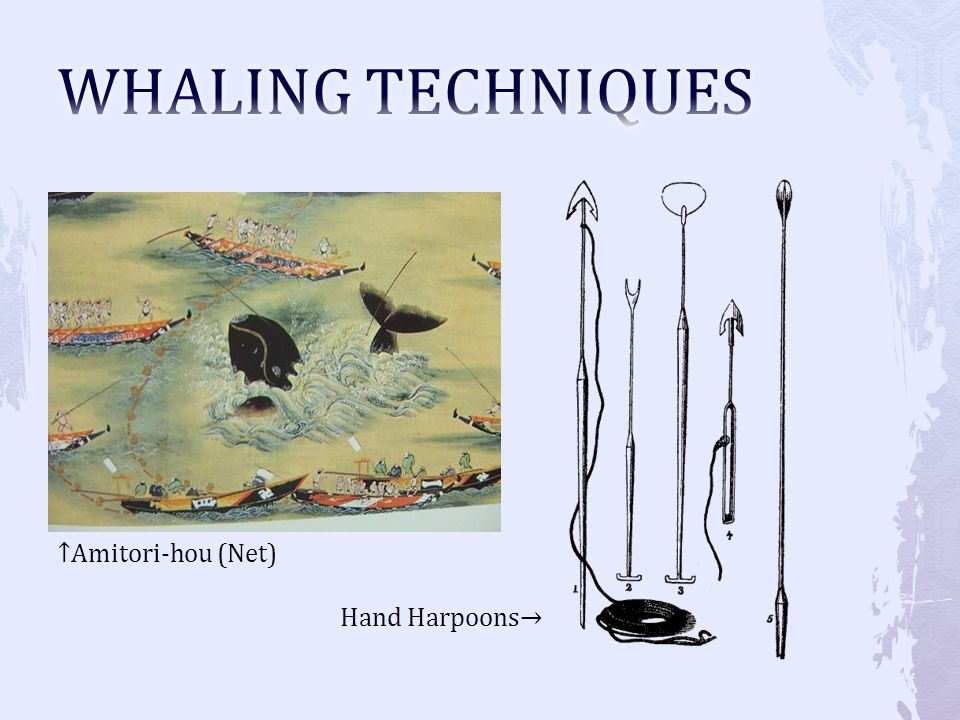 WHALING TECHNIQUES ↑Amitori-hou (Net) Hand Harpoons→