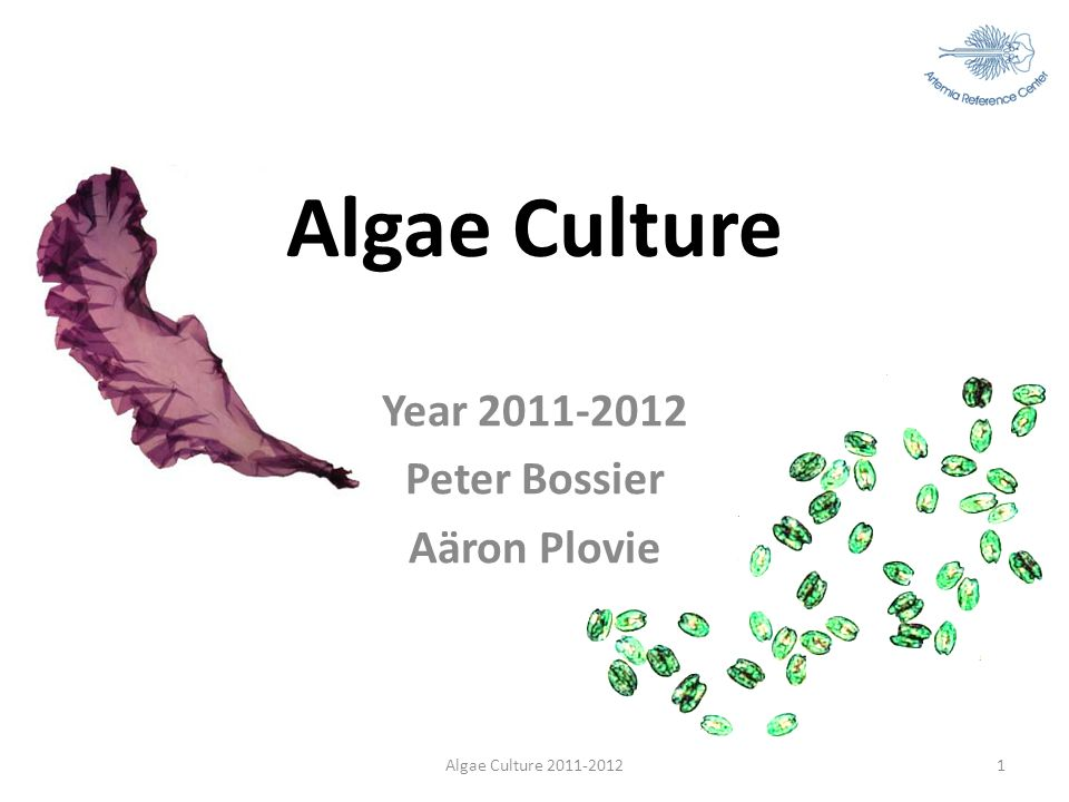 Year 2011-2012 Peter Bossier Aäron Plovie