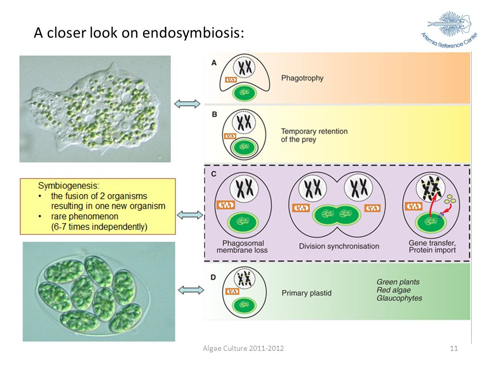 A closer look on endosymbiosis: