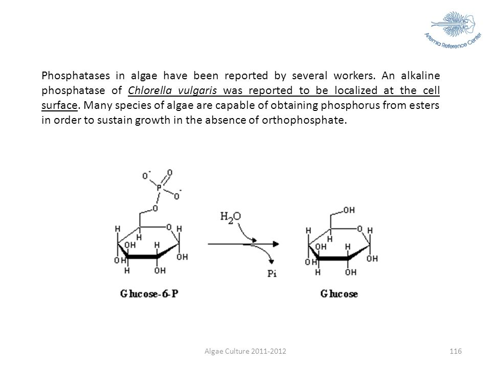 Phosphatases in algae have been reported by several workers