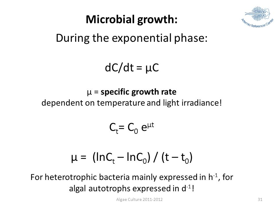 During the exponential phase: dC/dt = µC