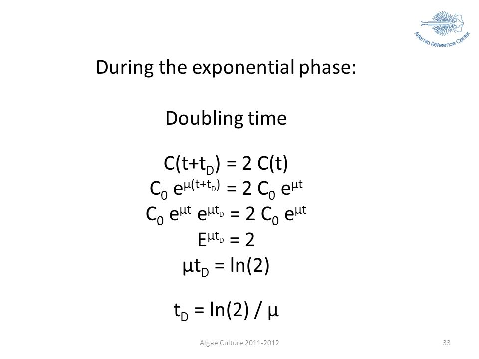During the exponential phase: