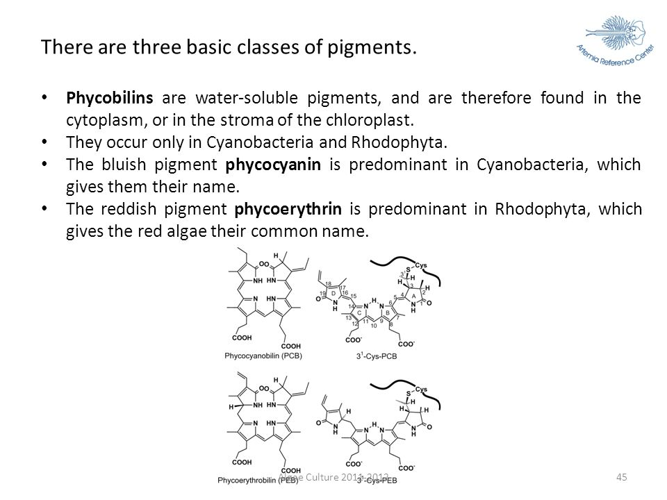 There are three basic classes of pigments.