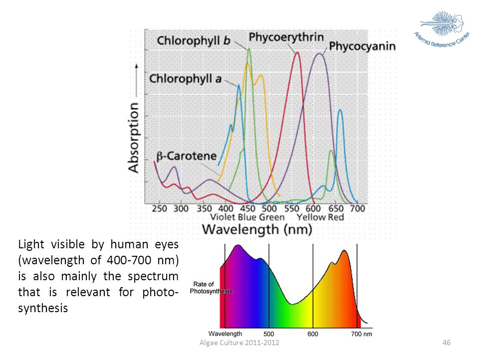Light visible by human eyes (wavelength of 400-700 nm) is also mainly the spectrum that is relevant for photo-synthesis