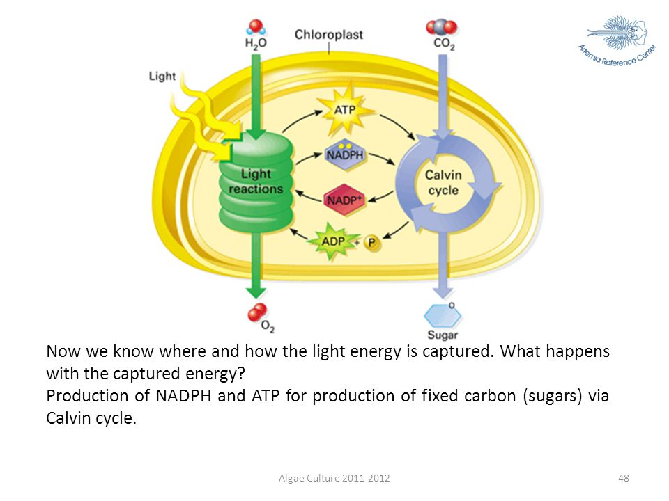 Now we know where and how the light energy is captured