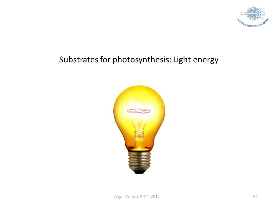 Substrates for photosynthesis: Light energy