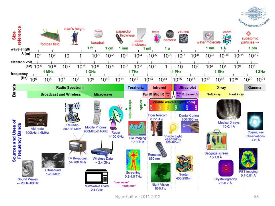 Algae Culture 2011-2012