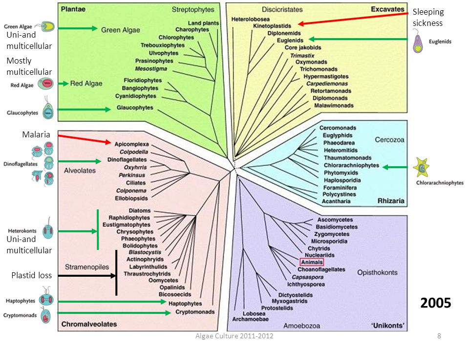2005 Sleeping sickness Uni-and multicellular Mostly multicellular