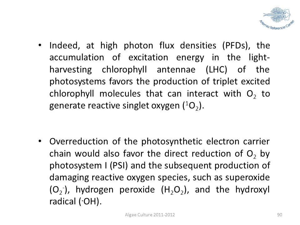 Indeed, at high photon flux densities (PFDs), the accumulation of excitation energy in the light-harvesting chlorophyll antennae (LHC) of the photosystems favors the production of triplet excited chlorophyll molecules that can interact with O2 to generate reactive singlet oxygen (1O2).