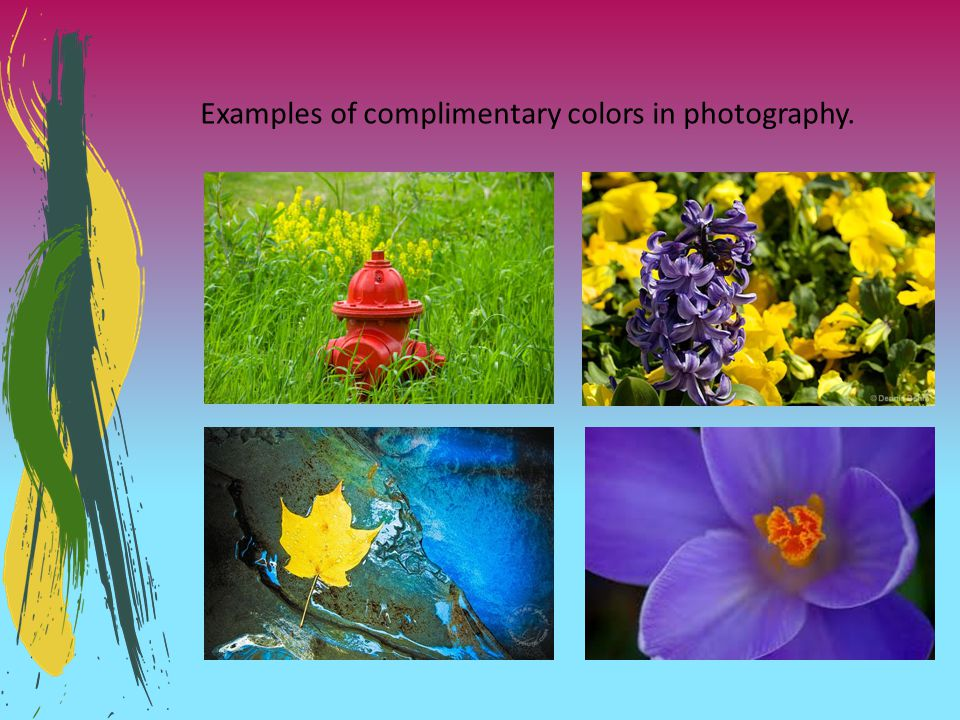Examples of complimentary colors in photography.