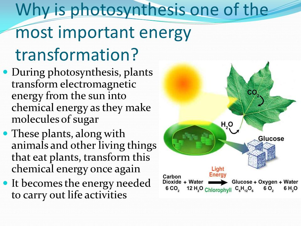 Why is photosynthesis one of the most important energy transformation
