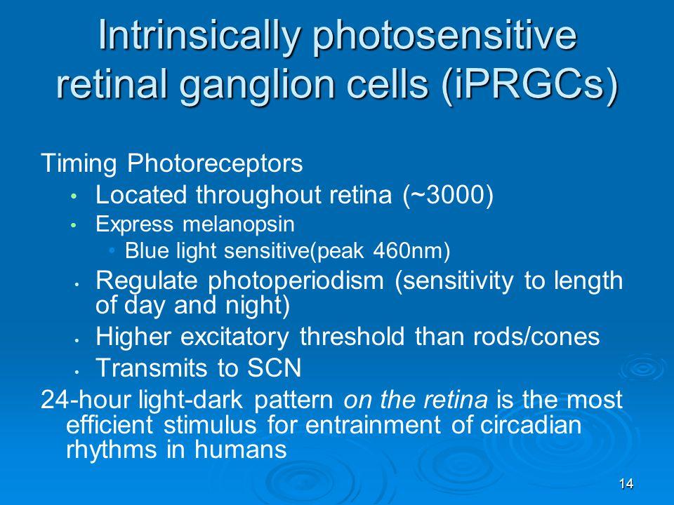 Intrinsically photosensitive retinal ganglion cells (iPRGCs)