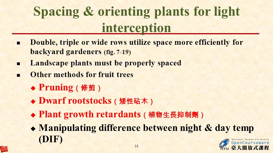 Spacing & orienting plants for light interception