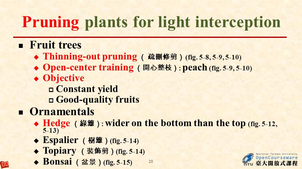 Pruning plants for light interception