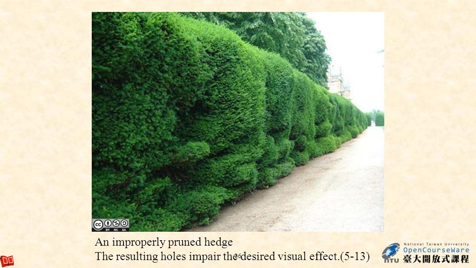 An improperly pruned hedge