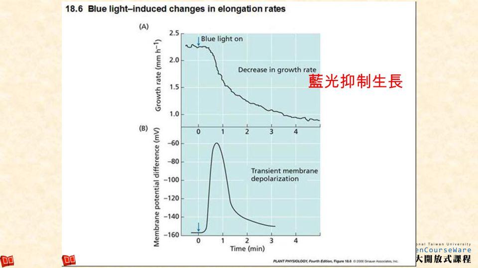 藍光抑制生長